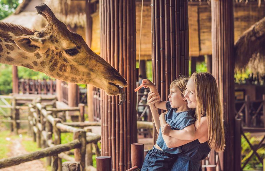 11 Southern California Zoos Worth Visiting