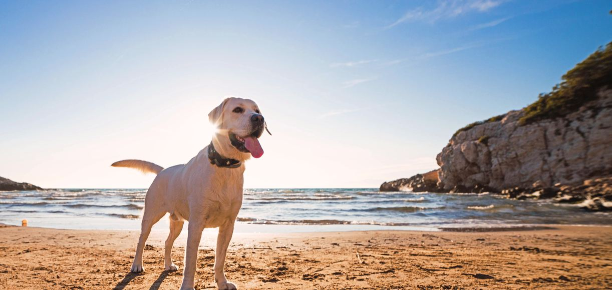 Your Pup Will Love These Dog Beaches in SoCal