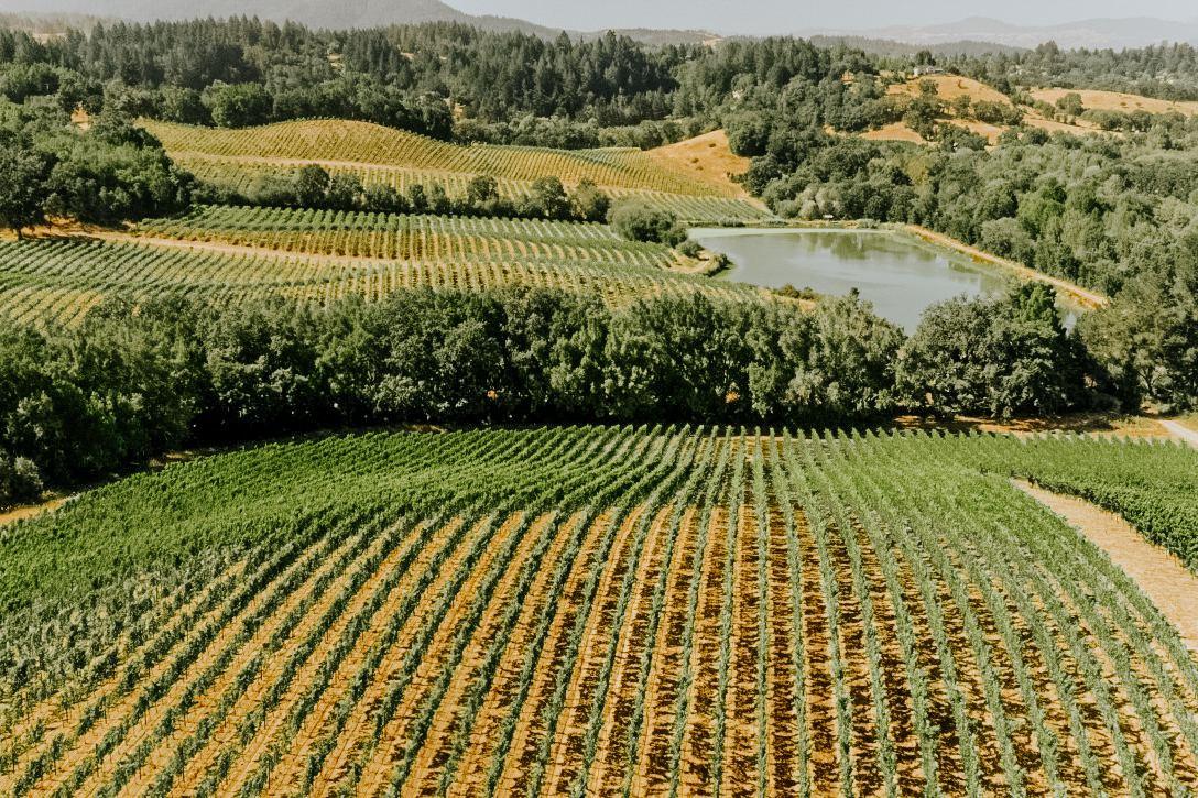 Sonoma Valley vineyards surround the gorgeous property.