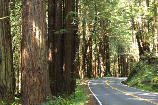 Hit The Road: The Scenic California Road Trips You Can Drive in One Day
